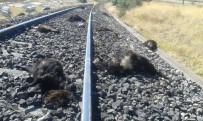 KEÇİ - Elazığ'da Trenin Çarptığı 90 Keçi Telef Oldu