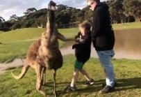 VAHŞİ YAŞAM - Kanguru Çocuğu Böyle Yumrukladı