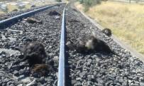 KEÇİ - Trenin Çarptığı 90 Keçi Telef Oldu