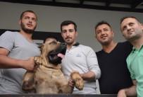 İŞ KAZASI - 2016 Yılında 7 SEDAŞ Elamanını Köpek Isırdı
