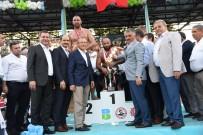 ALI GÜRBÜZ - Kurtdere'de Güreşler Göz Doldurdu