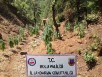 Ormanlık Alana Ekilmiş 254 Kök Hint Keneviri Ele Geçirildi