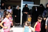 BULDUK - Kayseri'de Et Yiyen Örümcek Paniği