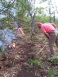 MUNZUR - Tunceli'deki Orman Yangınları Kontrol Altına Alındı