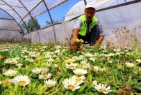 Van Büyükşehir Belediyesi 300 Bin Çiçek Ekip, 35 Bin Fidan Dikti