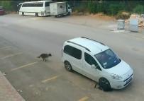 SÜRÜCÜ BELGESİ - Antalya'da Köpeğin Ölümüne Sebep Olan Araç Sürücüsünün Ehliyetine El Konuldu