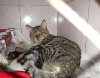 BALISTIK - Bir Kediyi Daha Tüfekle Vurdular