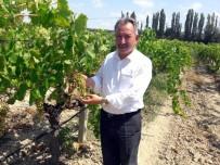 MAZLUM NURLU - CHP'li Nurlu'dan Kuru Üzüm İhracatında Teşvik Primi İsteği