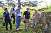 ZONGULDAK VALİSİ - Çınar, Orman Emval Üretimi Çalışmalarını İnceledi