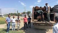 KEÇİ - Iğdır'da Genç Çiftçilere Hayvan Dağıtımı