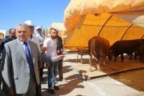 MIMARSINAN - Melikgazi'de Kurban Pazarı Hazır