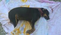 Milas'ta Kedi Ve Köpekleri Katlettiler