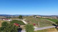 Türkiye'nin İlk Fındık Çiftliği Samsun'da Kuruluyor