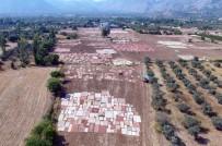MEHMET ÇELIK - Antalya'nın Susuz Tarımı Açıklaması Milyon Dolarlık Halı Tarlaları