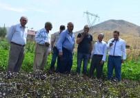 Bitlis'te 'Yerli Tohum Projesi' Hayata Geçirildi
