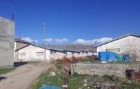 TAVUK ÇİFTLİĞİ - Büyükşehir Belediyesinden Ahır Denetimi
