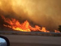 İzmir Güzelbahçe'de orman yangını!