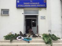 Jandarmadan Uyuşturucu Operasyonu Açıklaması 3 Gözaltı