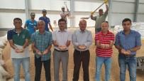 SÖZLEŞMELİ - Kayseri Pancar Kooperatifinin Sözleşmeli Tarımı Nohut Ve Yeşil Mercimek Ekimine Rağbeti Artırdı