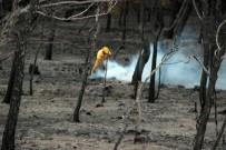 ORMAN YANGINI - Ayvalık'ta Yangın Sonrası Yürek Yakan Görüntü