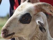 KURBAN KESİMİ - 'Bakışları canlı kurbanlık alın'
