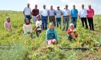 KURU FASULYE - Aksaray'da Yapılan Gölet Kıraç Topraklara Hayat Verdi