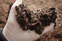 Solucan Gübresi Üretene Yüzde 50 Hibe Desteği