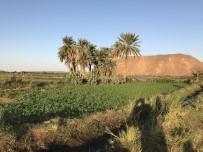 GIDA GÜVENLİĞİ - Sudan'da E-Tarıma Geçilecek