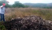 Tavuk Çiftliği Yüzünden Canlarından Bezen Köylüler Sinek Avı Başlattı