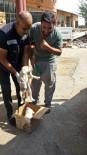YAVRU KÖPEK - Bingöl'de Bitkin Bulunan 2 Yavru Köpek Koruma Altına Alındı