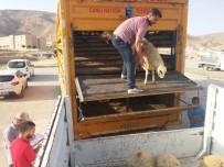 Hasankeyfli Genç Çiftçilere 148 Adet Hayvan Verildi