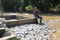 SEL FELAKETİ - Sel Felaketinde Yüz Binlerce Balık Telef Oldu