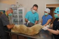 KORUYUCU HEKİMLİK - Yüzlerce Hayvan Osmangazi'de Sağlığına Kavuşuyor