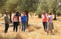 ZEYTİN AĞACI - ADÜ'nün Zeytinleri Medyaya Taşınıyor