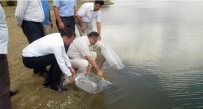 MERSIN - Bilecik'teki Göletlere 58 Bin 500 Adet Pullu Sazan Yavrusu Salındı