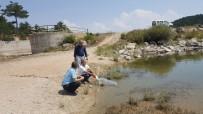 AYNALı SAZAN - Emet'te 3 Gölete 8 Bin Yavru Aynalı Sazan Balığı Bırakıldı