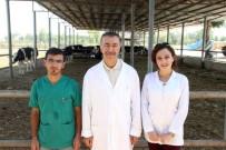 HARRAN ÜNIVERSITESI - Türk Bilim Adamları Kurban Bayramında Kesilen Hayvanın Acı Çekip Çekmediğini Araştırdı