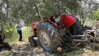 Traktör Sürücüsünü Zeytin Ağacı Kurtardı