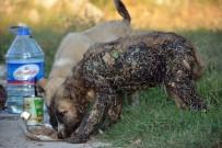 YAVRU KÖPEKLER - Zifte Bulanan Köpekleri Sıvı Yağ İle Temizleyerek Kurtardılar