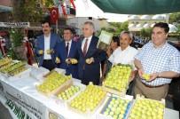 YÜZME YARIŞMASI - Buharkent 'İncir' Festivaline Hazır