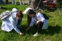 ALTıNOLUK - Gençler Doğal Bitkilerle Boyamayı Öğreniyor