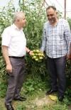 SEBZE ÜRETİMİ - Müdür Görentaş'tan Sebze Üreticilerine Ziyaret