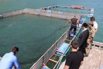 Torul Barajı'nda Alabalık Üretimi