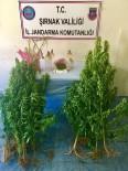 TAŞDELEN - Uludere'de Uyuşturucu Operasyonu