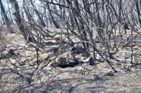 ZEYTINLIK - Ayvalık'ta 15 Hektar Alan Yandı
