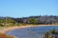NAMIK KEMAL NAZLI - Ayvalık'ta Aynı Ormanda Bir Yangın Daha Çıktı