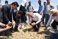 ANKARA VALİSİ - Bakan Fakıbaba, Tarım İşçileriyle Birlikte Soğan Topladı