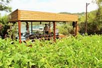 DOLAR - Lüks Turistik Tesiste Organik Tarım