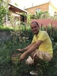 MANEVI TATMIN - Yöneticiliği Bıraktı Domates Yetiştiriyor