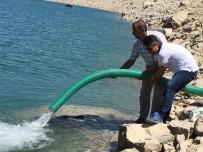 Batman'da Baraj Gölüne 600 Bin Adet Pullu Sazan Bırakıldı